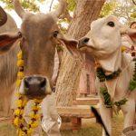 Фото разказ за пътешествие в Индия