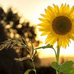 Трите гуни на материалната природа и нашето здраве